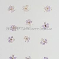 翠珠花-淡紫色