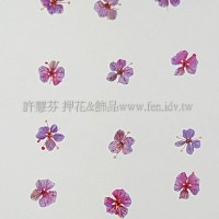 翠珠花-淡紫紅色
