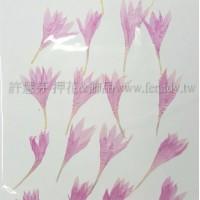 矢車菊-粉紅