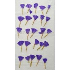 星辰花-藍-押花花材
