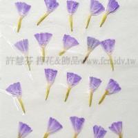 星辰花-紫-押花花材