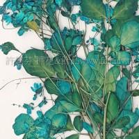 唐松草花-藍