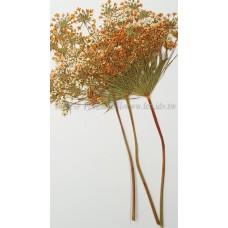 蕾絲大側枝-淡橙
