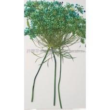 蕾絲大側枝-天藍