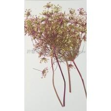 蕾絲大側枝-淡桃紅