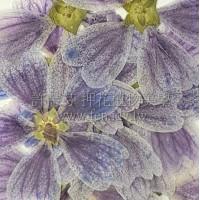 錦葵-藍色 - 押花花材