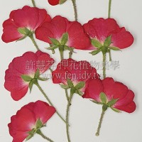 小玫瑰側枝-紅色