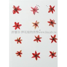 蔥花-紅色