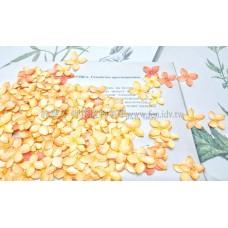 仙丹-尖瓣橙色
