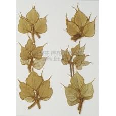 銀葛葉-原色-押花花材