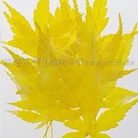 楓葉-染黃色