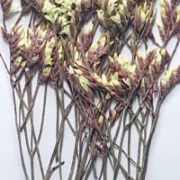 水晶花-紅黃色