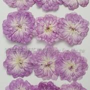 玫瑰花-香水天使-淡紫紅
