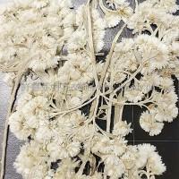 金玉滿堂-白色