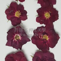 玫瑰花-原色絲絨紅