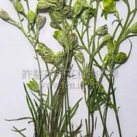 千鳥花帶支-綠色-押花花材