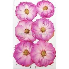 玫瑰花-淡粉紅