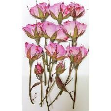 玫瑰花-淡粉紅側枝
