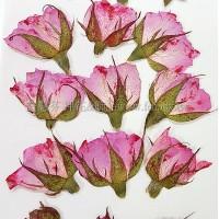 玫瑰花-淡粉紅側