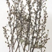尤加利花-原色-押花花材