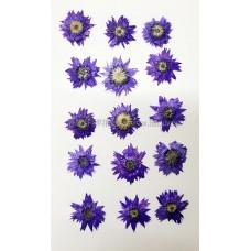 香菁花-紫色