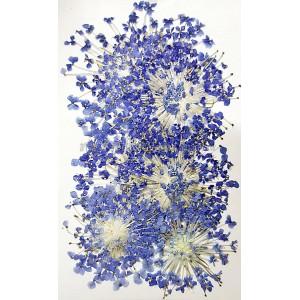 大翠珠-藍色