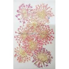 大翠珠-粉紅色