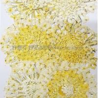 大翠珠-黃色