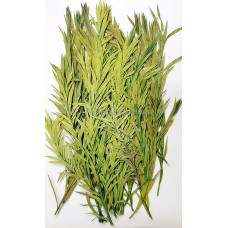 串錢柳-綠色-押花葉材