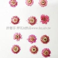 香菁花-粉紅色