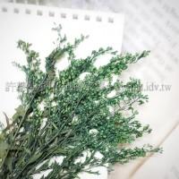 麒麟花-綠色-押花花材