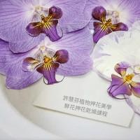 蝴蝶蘭-大型白紫色